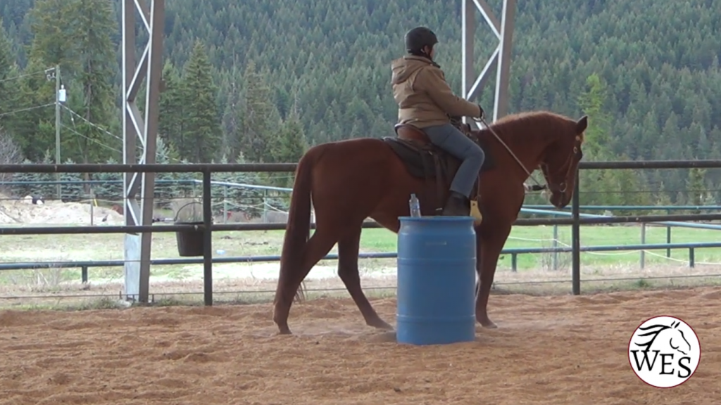 Working Equitation horse riding past the Jug