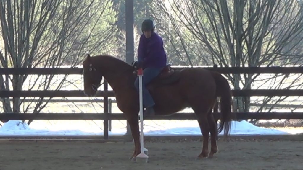 Rider using the right hand to pick up a cup on the left. There is no switching hands in Working Equitation