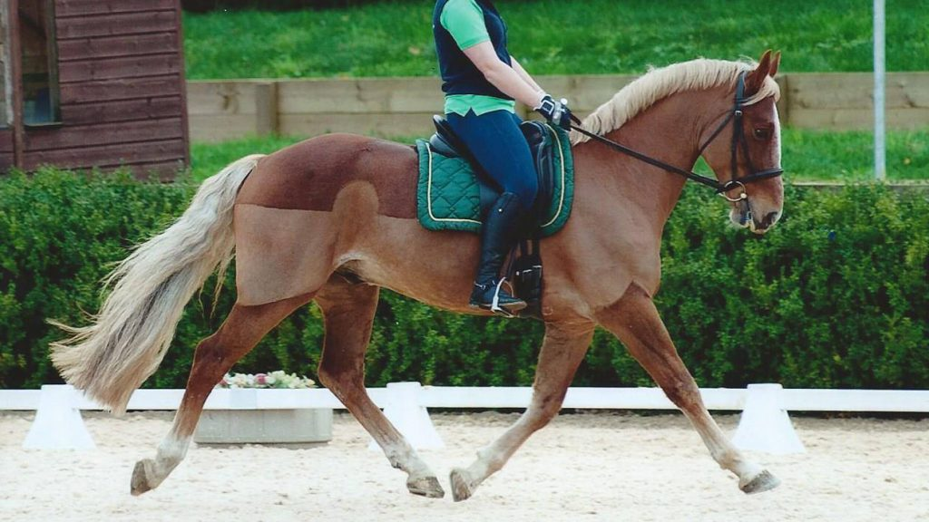 Easily Teach Your Horse To Lengthen And Shorten Strides showing Horse doing medium trot